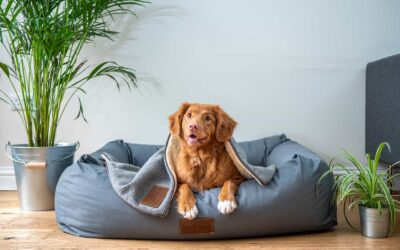 How To Pet-Proof Your Rental Property